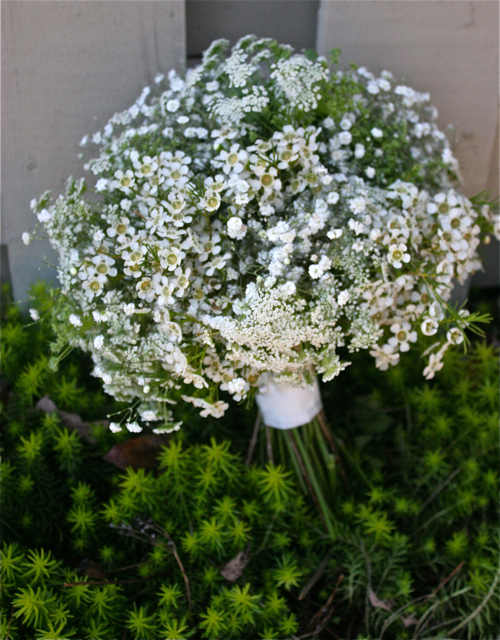 babies breath with waxflowers and queen anne's lace bridal bouquet